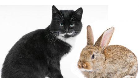 pair, cat, rabbit