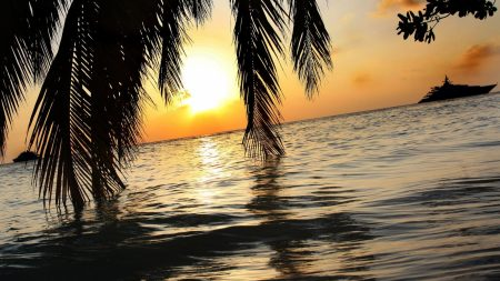 palm tree, branches, sea
