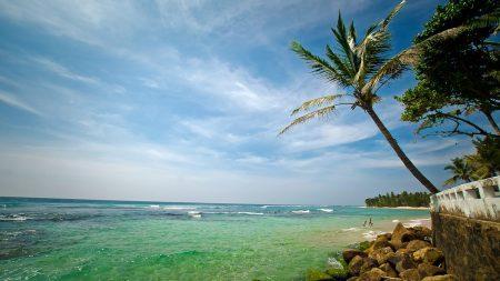 palm tree, coast, stones