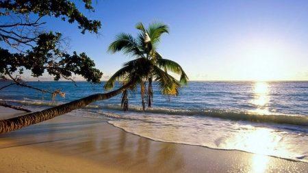 palm tree, trees, beach