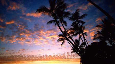 palm trees, coast, silhouettes