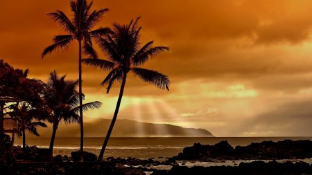 palm trees, decline, evening