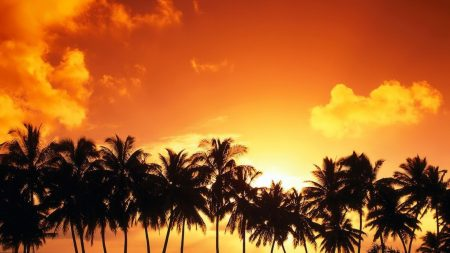 palm trees, decline, silhouettes