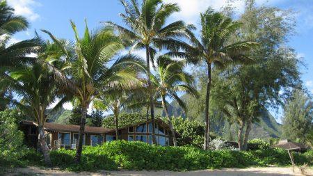 palm trees, house, coast