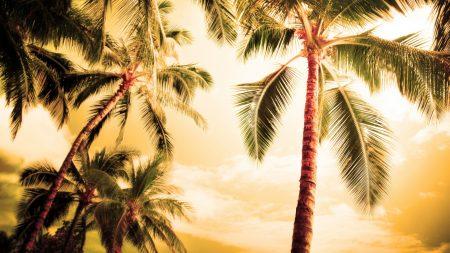 palm trees, kroner, lighting