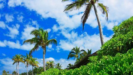 palm trees, sky, clouds