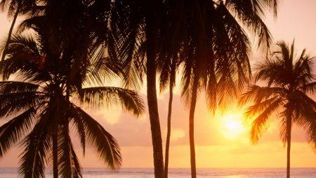 palm trees, sun, beach
