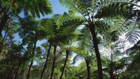 palm trees, trees, crones