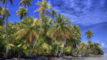palm trees, yellow, coast