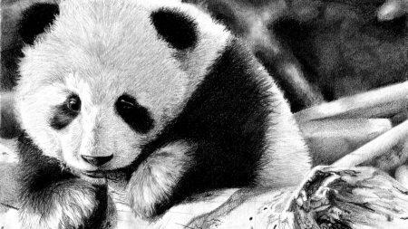 panda, color, face