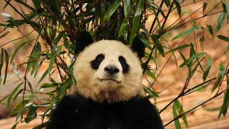 panda, leaves, twigs