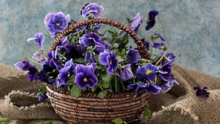 pansies, flowers, shopping