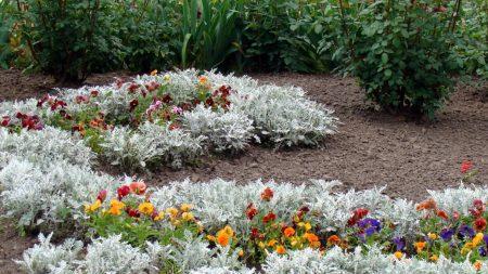pansies, flowers, wormwood