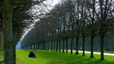 paris, park, trees enamoured