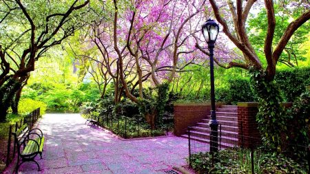 park, garden, bench