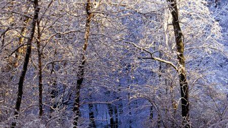 park, trees, snow