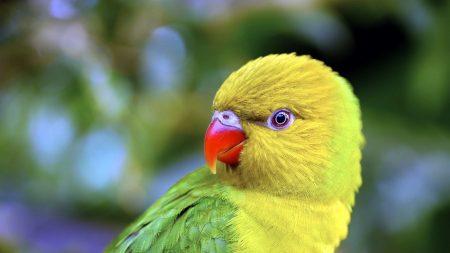parrot, beak, color