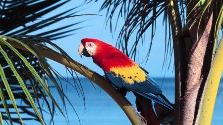 parrot, bird, branch