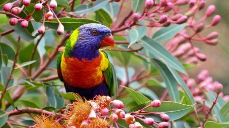 parrot, branch, leaves