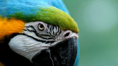 parrot, colorful, feathers