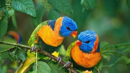 parrot, love, branch