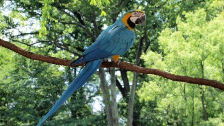 parrot, macaw, bird