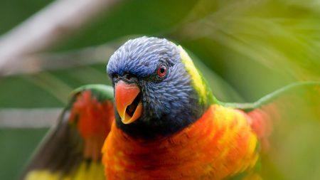 parrot, muzzle, beak