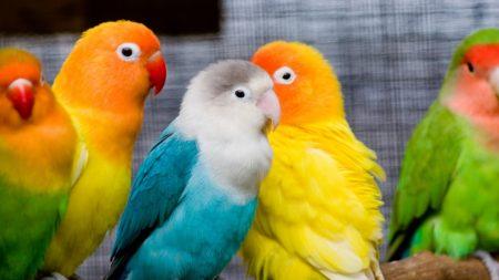 parrots, birds, branch
