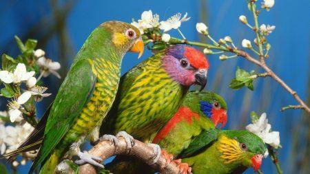 parrots, colorful, bird