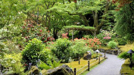 path, garden, vegetation