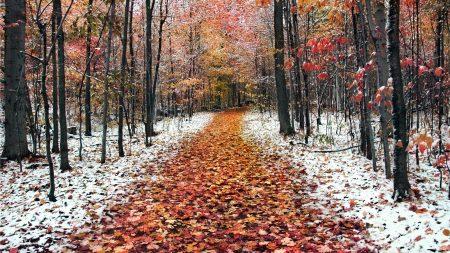 path, wood, autumn