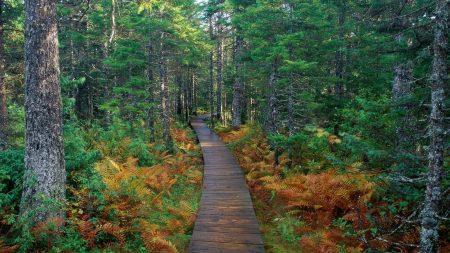 path, wood, trees