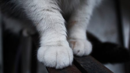 paws, cat, fluffy