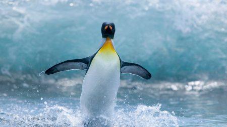 penguin, bird, spray