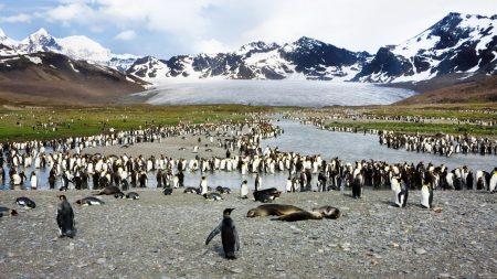 penguins, birds, flock