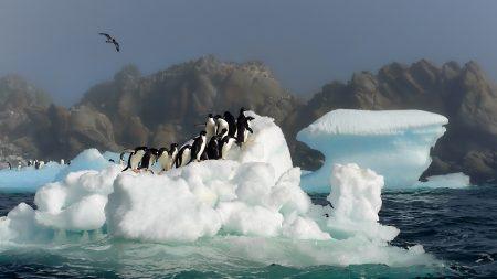 penguins, birds, jump