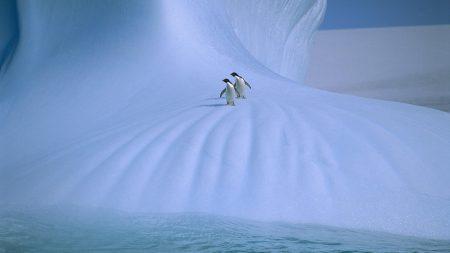 penguins, ice, snow