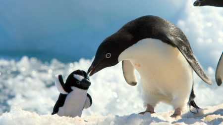 penguins, snow, baby