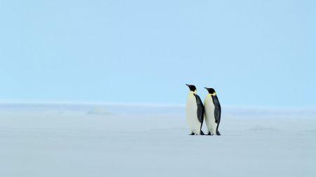 penguins, steam, ice