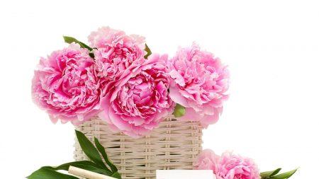 peonies, flower, basket