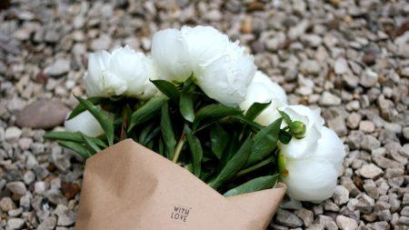 peonies, flowers, flower
