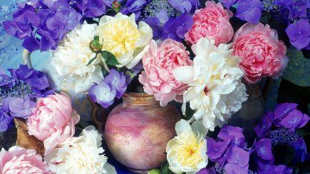 peonies, hydrangea, flowers
