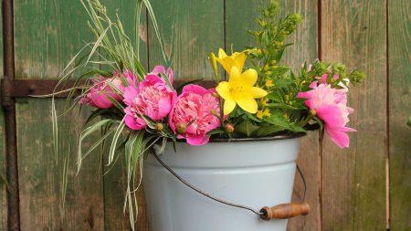 peonies, lilies, flowers