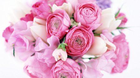 peonies, tulips, flower