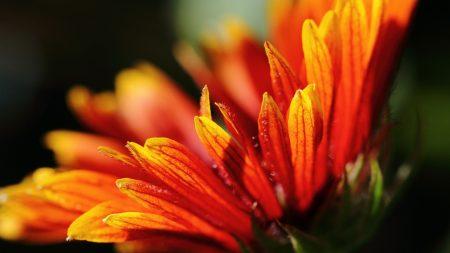 petals, bright, flowers