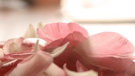 petals, flower, romance