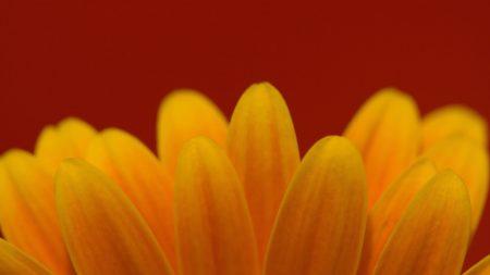 petals, flower, small