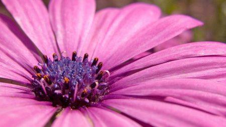 petals, flower, stamen