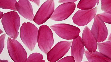 petals, pink, surface