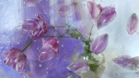 petals, plant, flowers